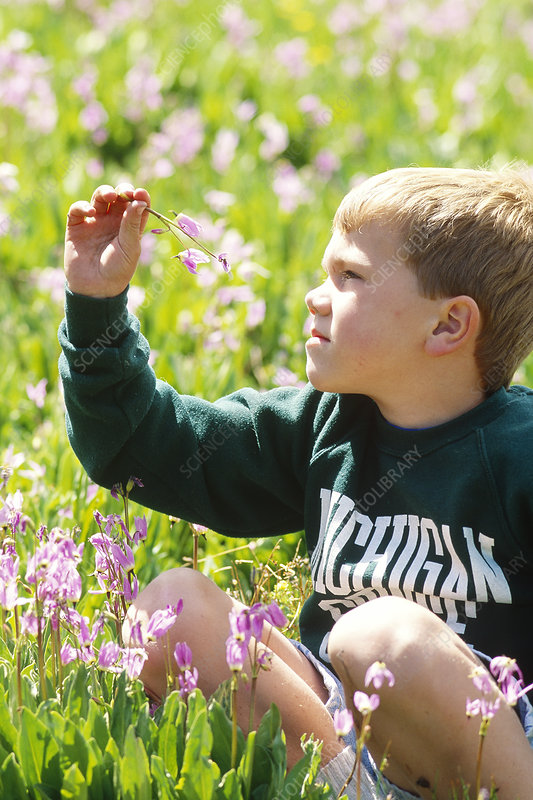 Young boy in wildflowers