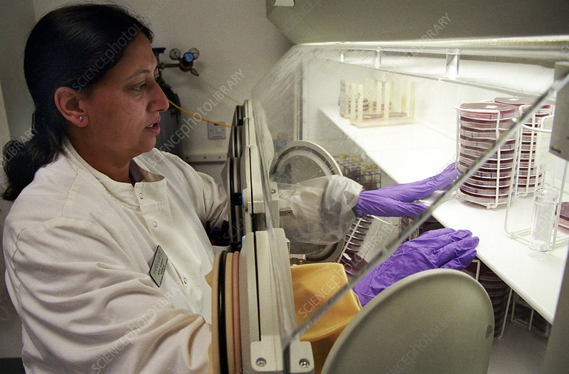microbiologi