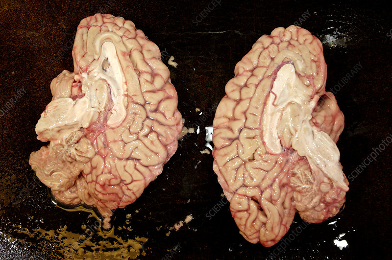 a study on the reducibility of the human brain The foresight lab of the human brain project is a research group comprised of   such an approach would, at least tacitly, propose a 'we' that was reducible to.