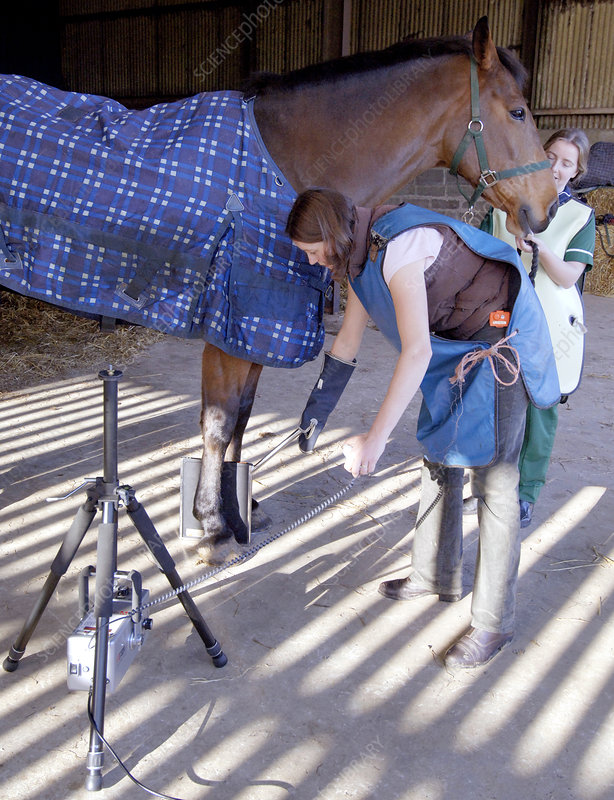 how to read x ray horse