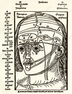 Brain anatomy, 16th century diagram