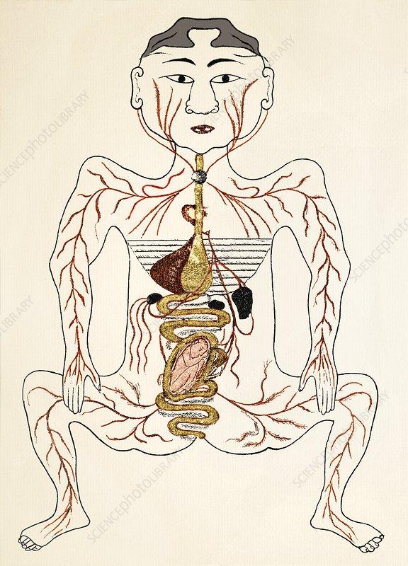 Pregnant woman anatomy diagram