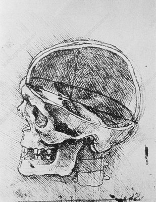 Skull anatomy, 15th century