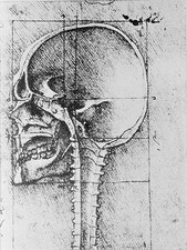 Skull anatomy, 15th century