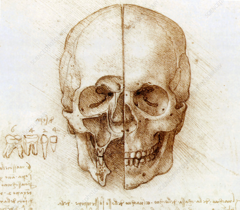 the nature and function of leonardo da vinci s and michelangelo drawings Review the nature and function of michelangelo's drawings on  drawing review the nature and function of leonardo da vinci's drawings on the.