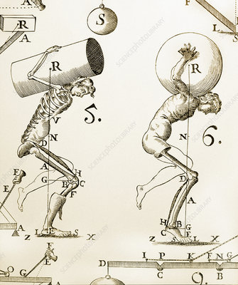 Biomechanics, historical artwork
