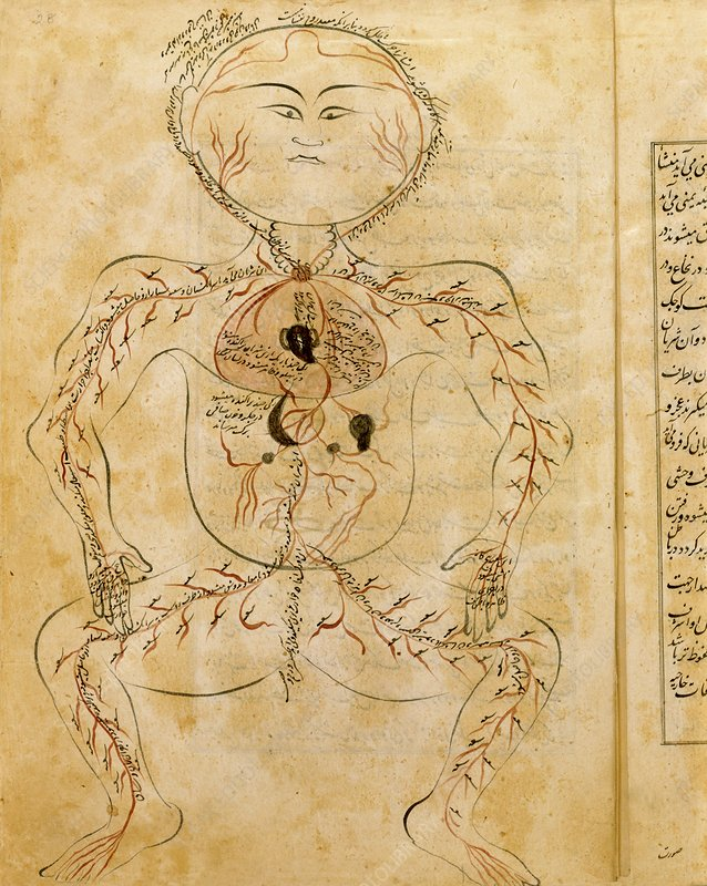 15th century drawing of the circulatory system
