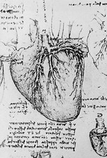Diagram of heart and vessels by Leonardo Da Vinci