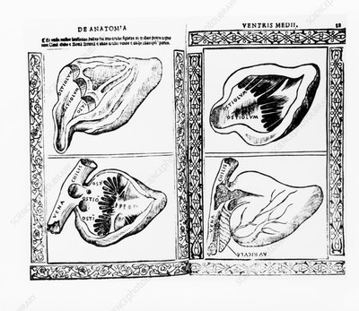 Four views of a dissected heart, 16th century