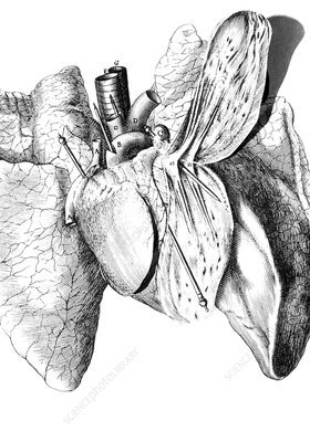 Pop-up human heart from Descartes' book De Homine