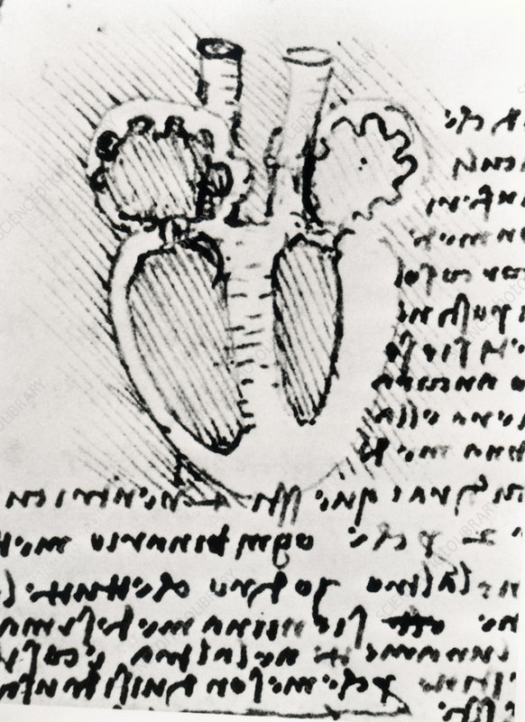 Diagram of a dissected heart by Leonardo Da Vinci