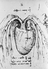 Heart anatomy, 15th century