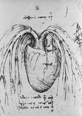 Heart anatomy, 15th century