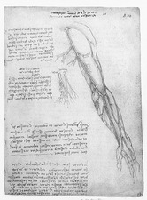 Da Vinci Superficial Vessels of the Arm