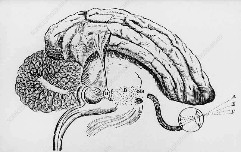 Illustration of pineal gland from Descartes' book
