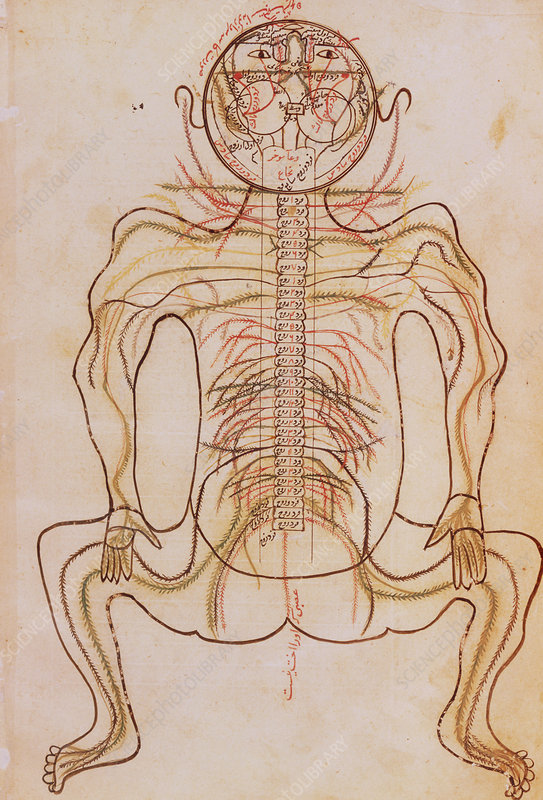 15th century drawing of human nervous system.