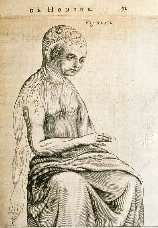 Engraving of nervous coordination of arm movement