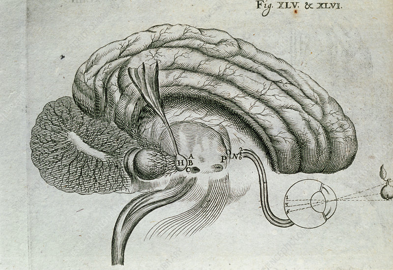 Engraving of visual activity of the brain and eyes