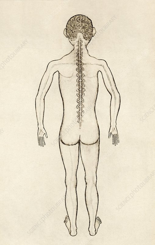 Spinal anatomy, 14th century artwork