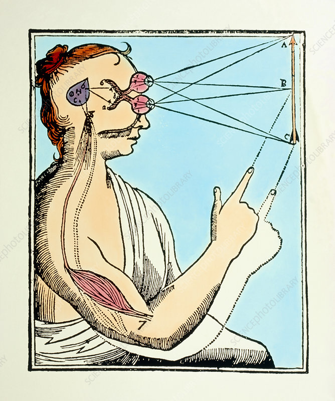 Illustration from De Homine by Rene Descartes