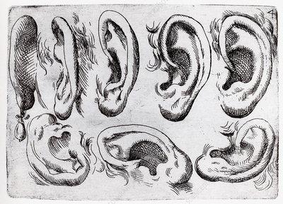 Human ears