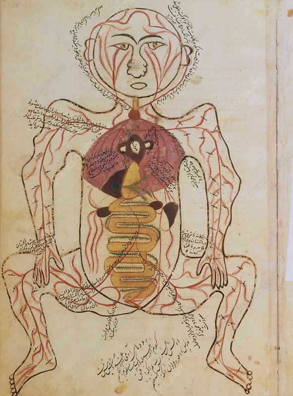 15th century drawing of the gut and arteries.