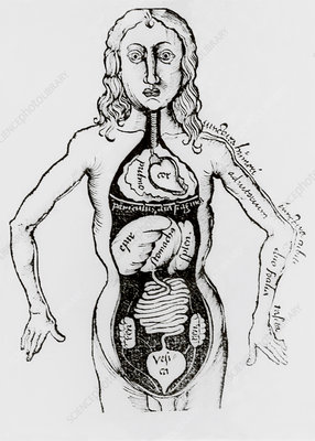 Human anatomy as seen in a book published in 1508