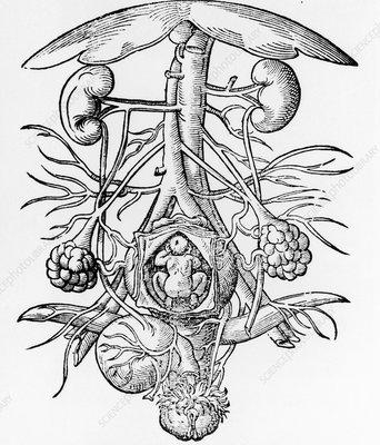 Pregnancy, 16th century artwork