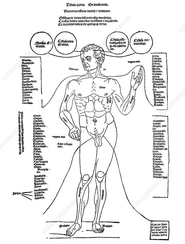 Common diseases, 15th century diagram