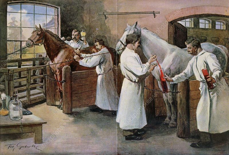 Painting of horses being bled for serum,diphtheria