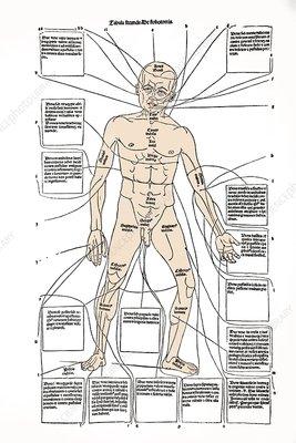 Bloodletting sites, 15th century diagram