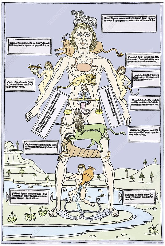 Medical zodiac, 15th century diagram - Stock Image - N800
