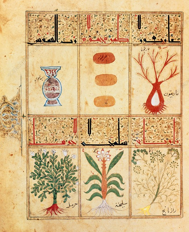 Arabic manuscript on medicinal herbs