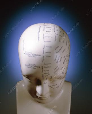 Phrenology bust by L.N. Fowler
