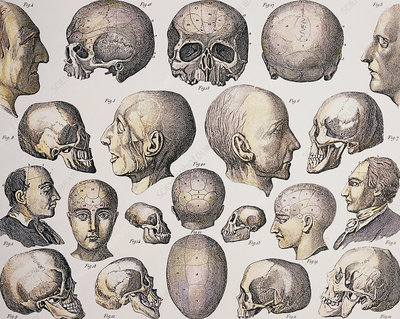 Historical art of phrenological skulls and heads