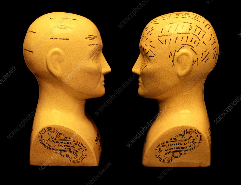 Phrenology busts