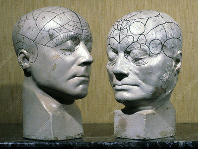 Jean Charcot's phrenological models