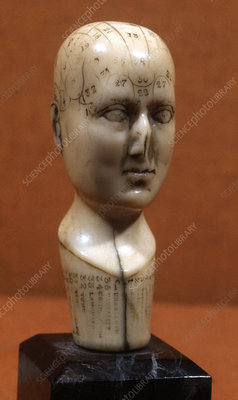 Phrenology head, 19th century
