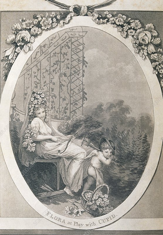 Frontispiece of Erasmus Darwin's Botanic Garden - Stock ...