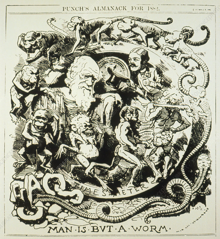 Evolutionary cartoon taken from Punch's Almanack