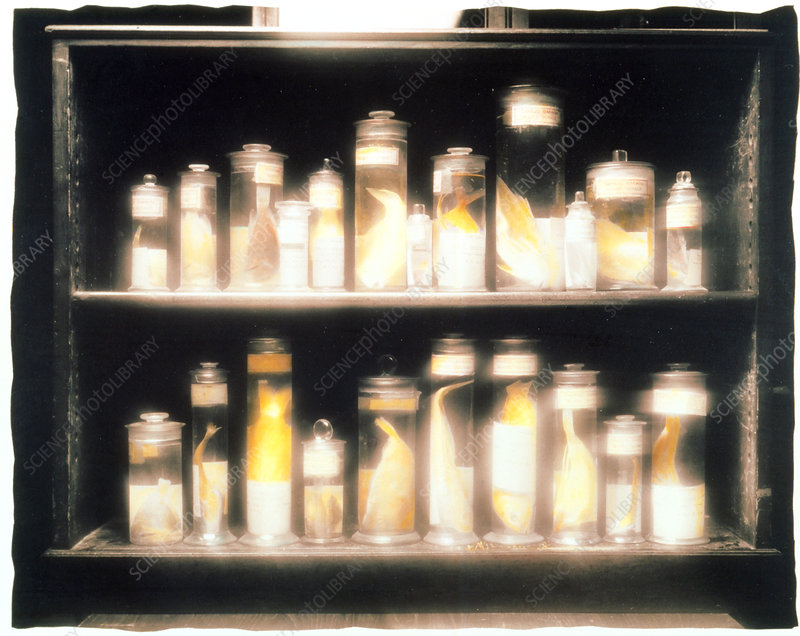 Preserved fish specimens gathered by Darwin