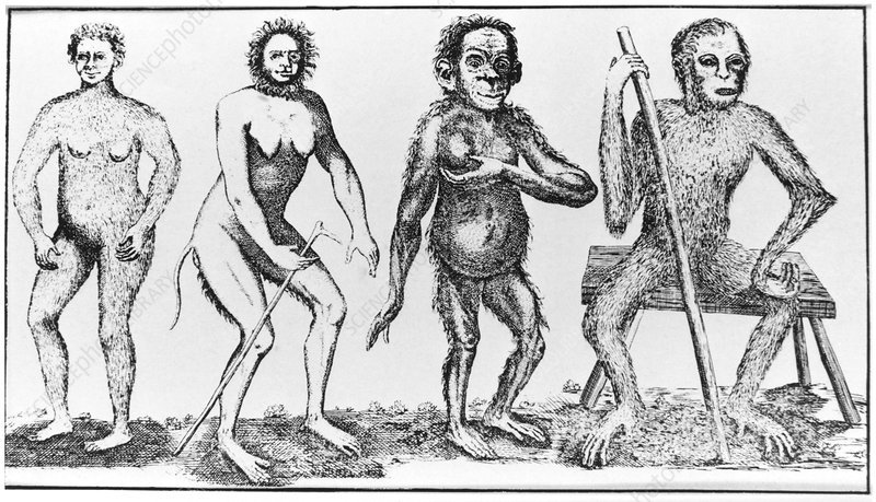 Historical engraving of apelike humans