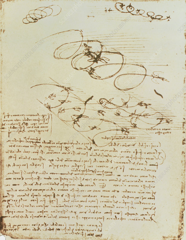 Artwork of birds in flight by Leonardo da Vinci
