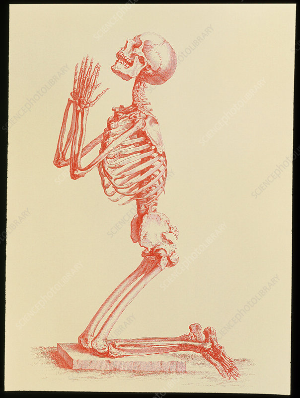 Engraving of praying male skeleton by Cheselden