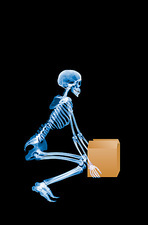 Skeleton lifting a box correctly