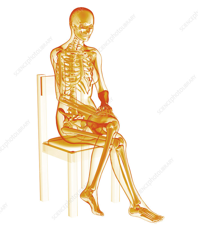 Skeleton sitting