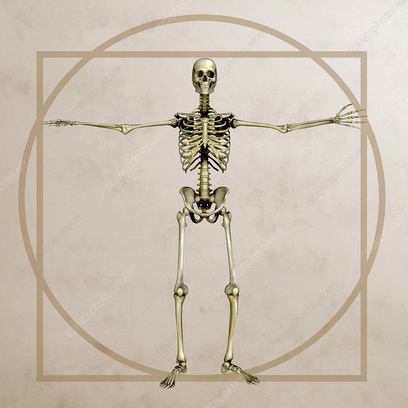 Skeleton, artwork