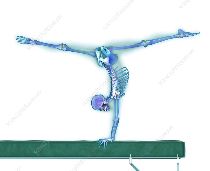 Gymnast balancing on a beam, X-ray artwork