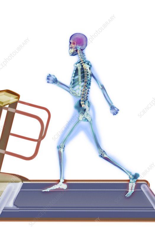 Fitness training, X-ray artwork