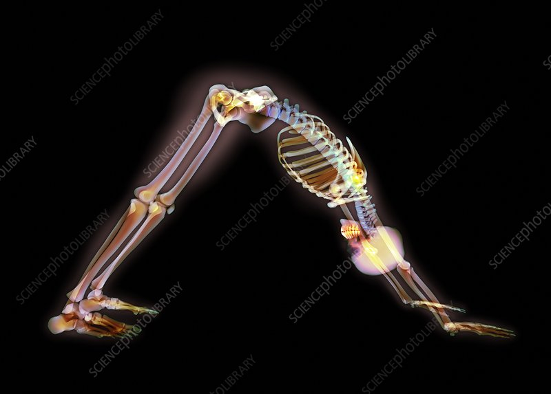 Yoga stretch, X-ray artwork
